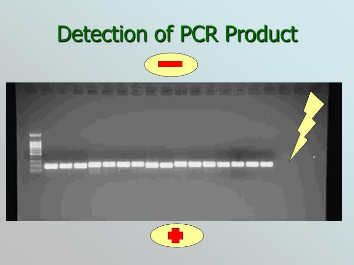 Detection of PCR Product