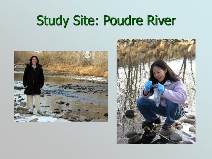 Study Site: Poudre River
