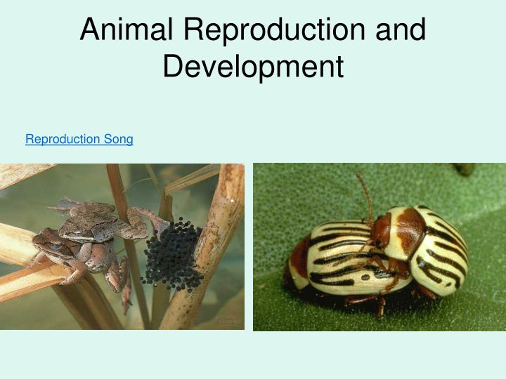 Animal reproduction and development