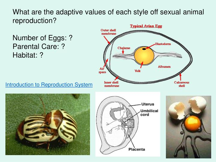 What are the adaptive values of each style off sexual animal reproduction?