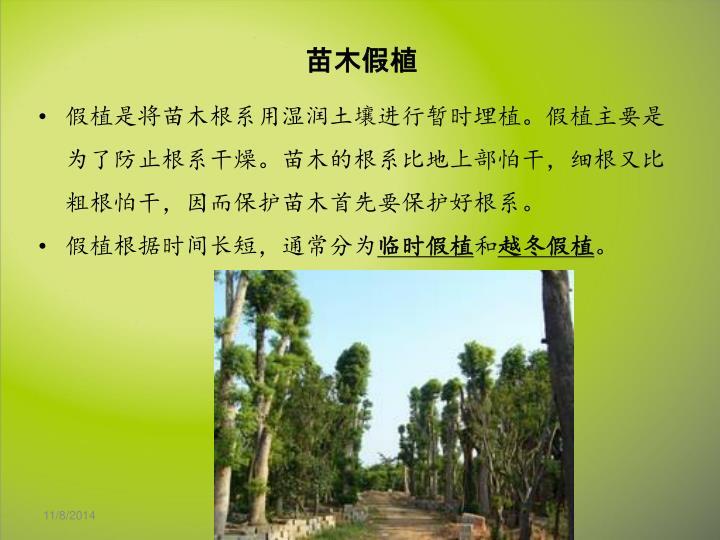 假植是将苗木根系用湿润土壤进行暂时埋植。假植主要是为了防止根系干燥。苗木的根系比地上部怕干,细根又比粗根怕干,因而保护苗木首先要保护好根系。
