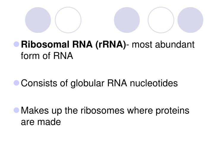 Ribosomal RNA (rRNA)