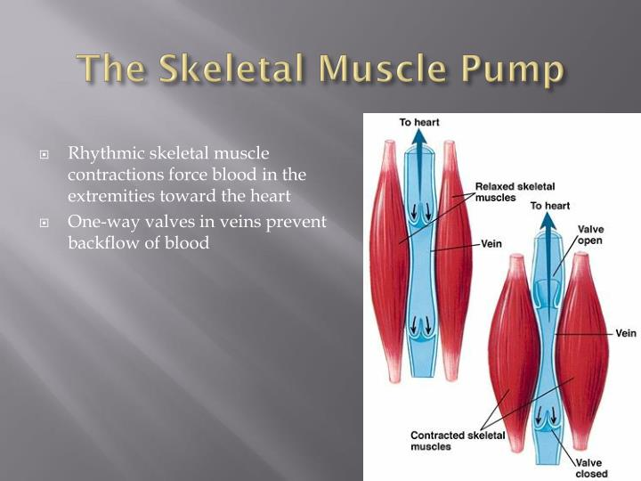 The Skeletal Muscle Pump