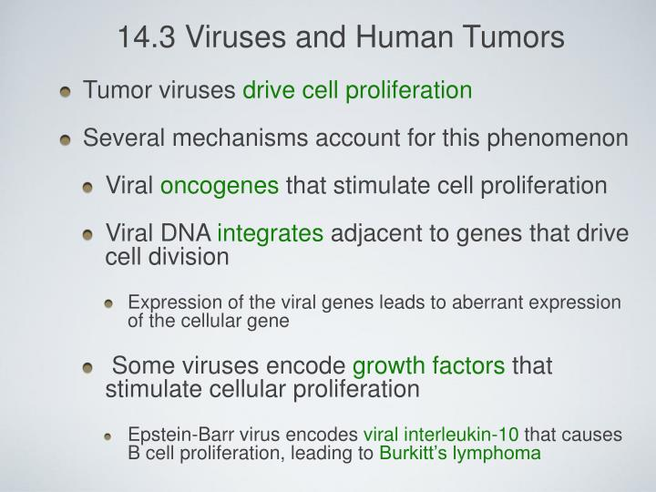 14.3 Viruses and Human Tumors