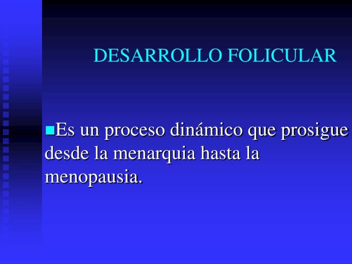 DESARROLLO FOLICULAR