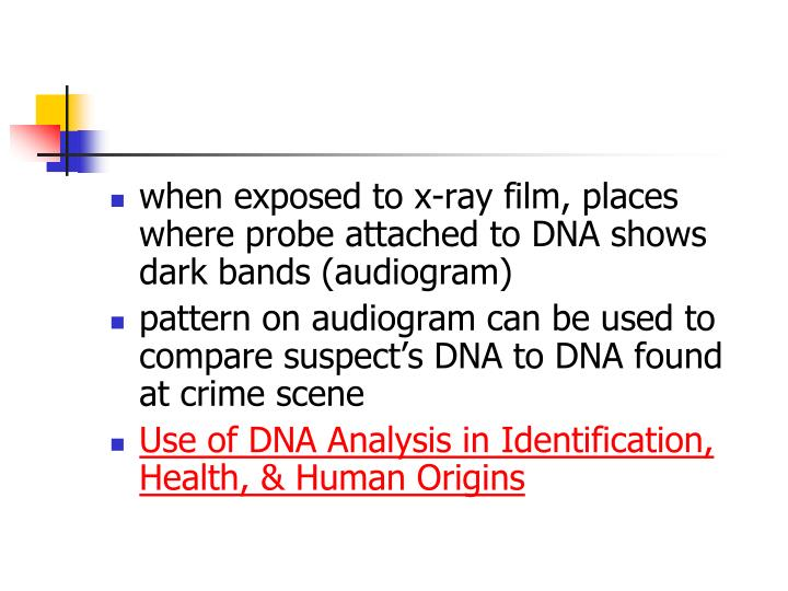 when exposed to x-ray film, places where probe attached to DNA shows dark bands (audiogram)