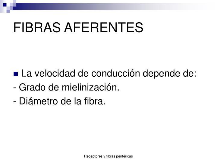 FIBRAS AFERENTES