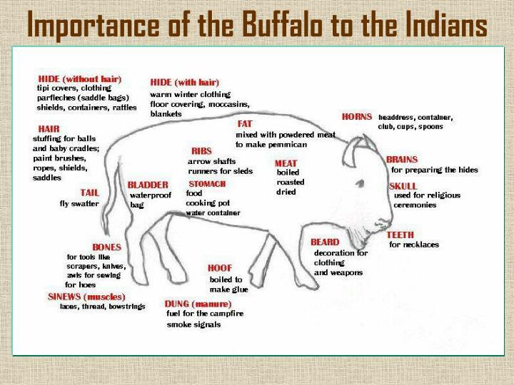 Importance of the Buffalo to the Indians