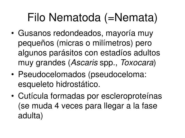 Filo Nematoda (=Nemata)