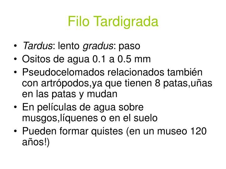 Filo Tardigrada