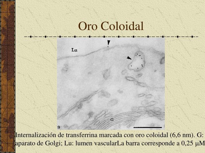 Oro Coloidal