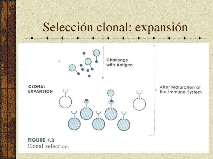 Selección clonal: expansión