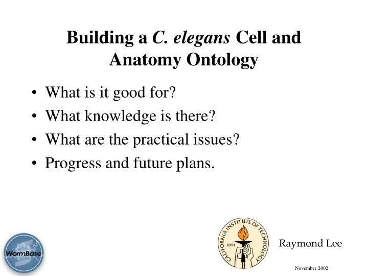 building a c elegans cell and anatomy ontology