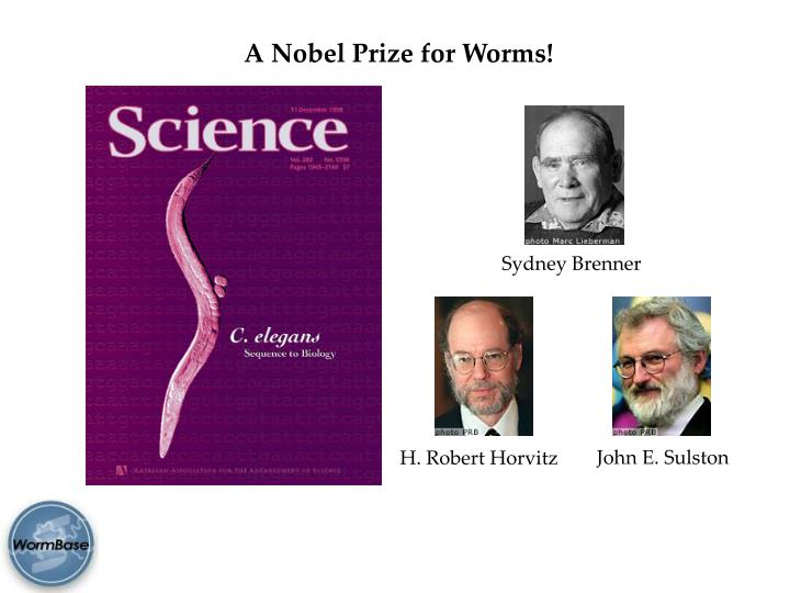 A Nobel Prize for Worms!