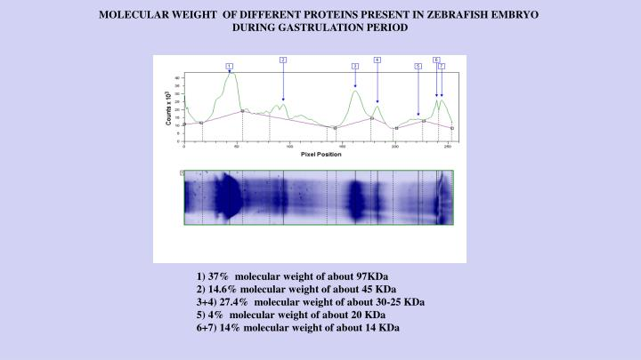 MOLECULAR WEIGHT  OF DIFFERENT PROTEINS PRESENT IN ZEBRAFISH EMBRYO