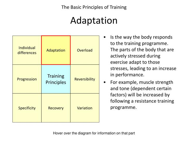 Is the way the body responds to the training programme. The parts of the body that are actively stressed during exercise adapt to those stresses, leading to an increase in performance.