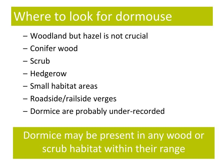 Where to look for dormouse