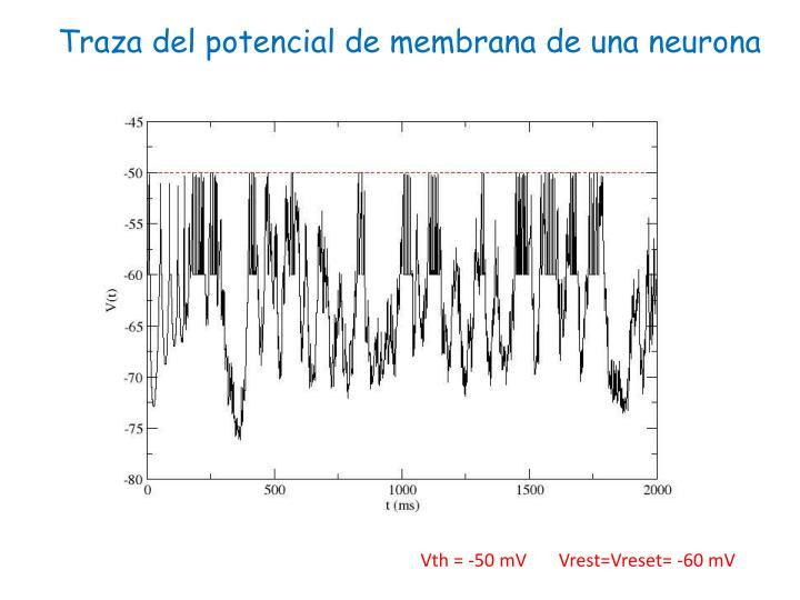 Traza del potencial de membrana de una neurona