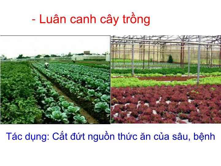 - Luân canh cây trồng