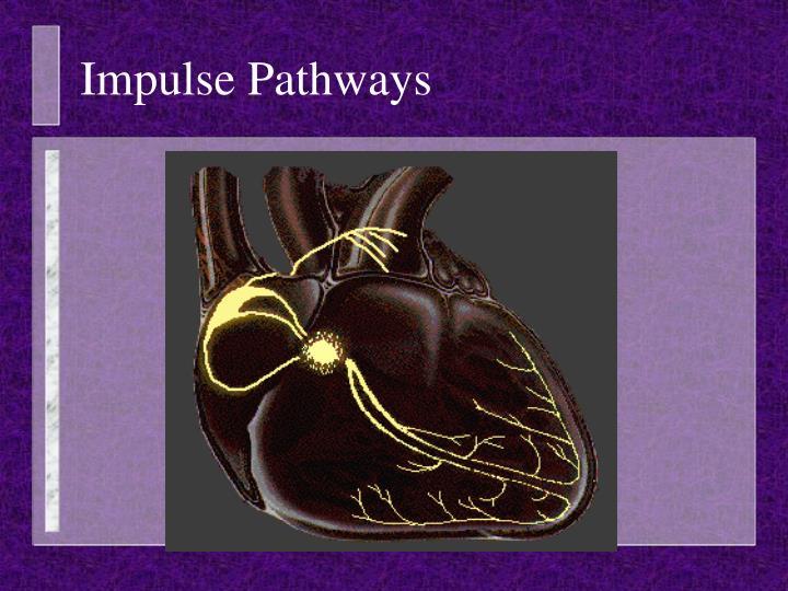 Impulse Pathways