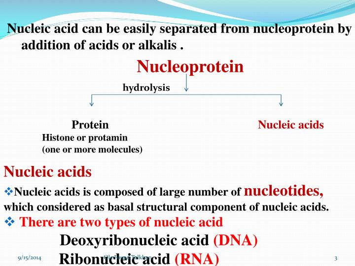 Nucleic acid can be easily separated from nucleoprotein by addition of acids or alkalis .
