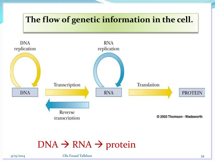 DNA Replication - General considerations