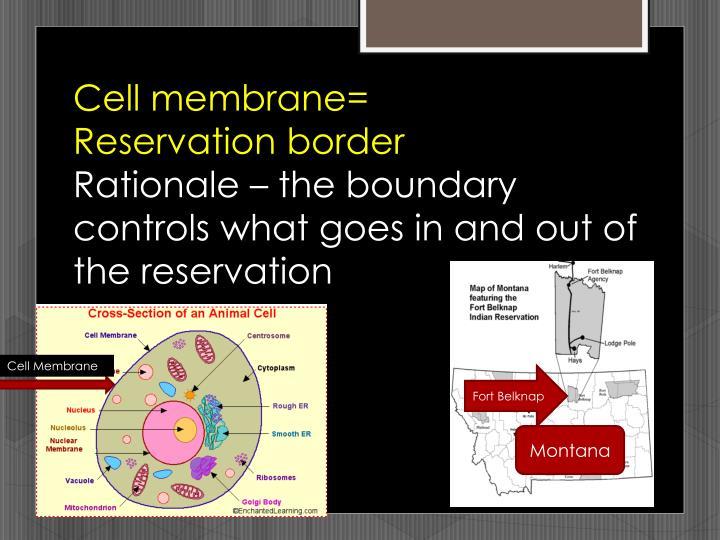 Cell membrane=