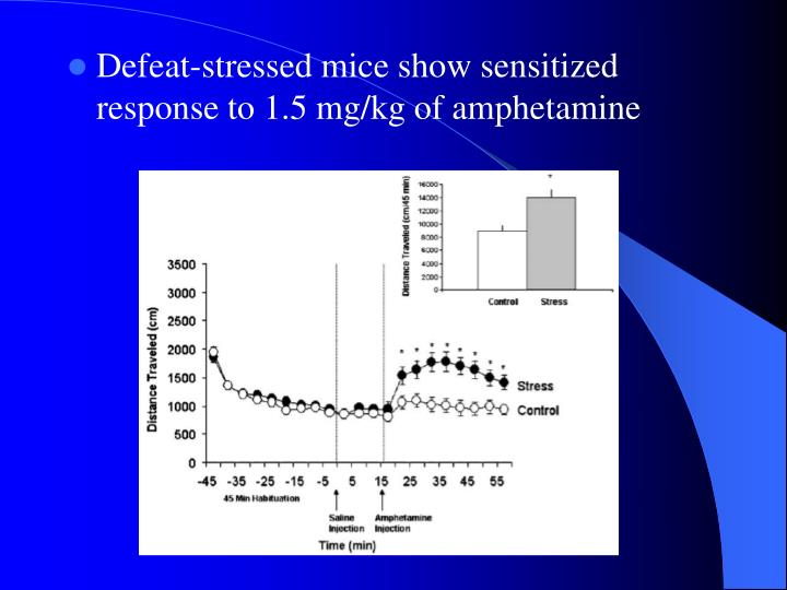 Defeat-stressed mice show sensitized response to 1.5 mg/kg of amphetamine