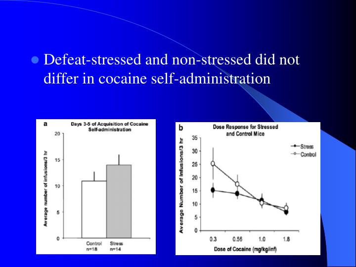 Defeat-stressed and non-stressed did not differ in cocaine self-administration