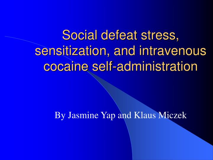 Social defeat stress sensitization and intravenous cocaine self administration