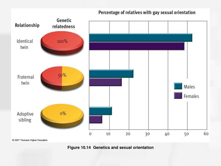 Figure 10.14  Genetics and sexual orientation