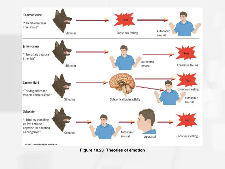 Figure 10.23  Theories of emotion