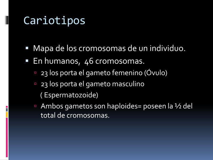 Cariotipos