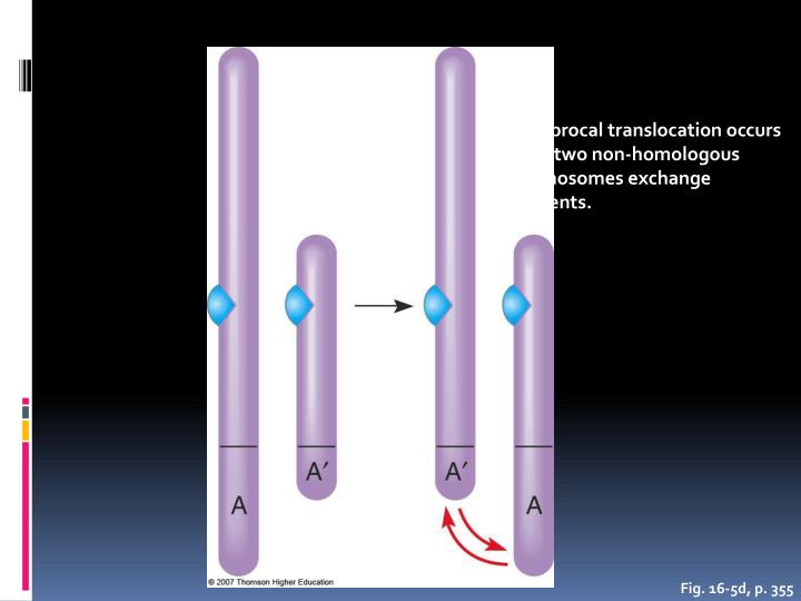 A reciprocal translocation occurs when two non-homologous chromosomes exchange segments.