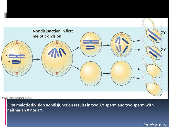 Nondisjunction in first meiotic division