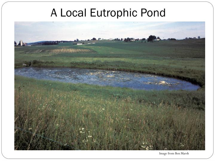 A Local Eutrophic Pond