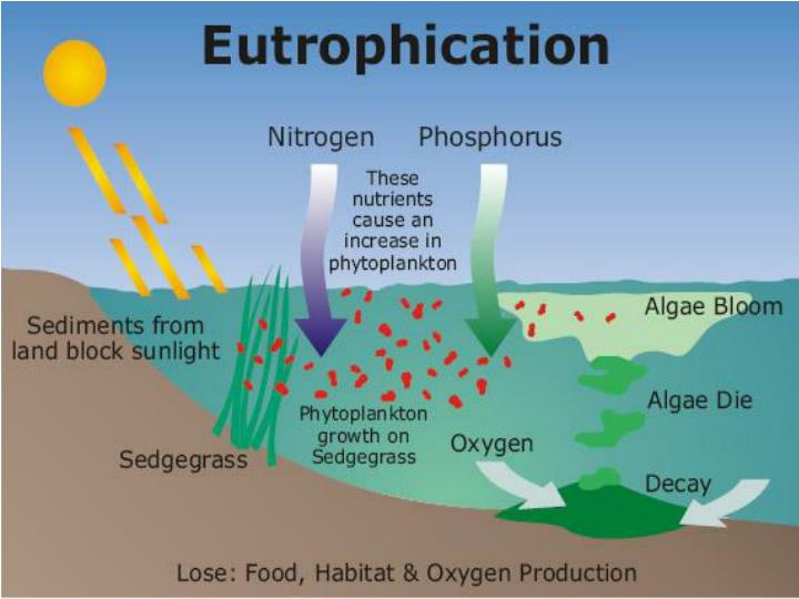 Eutrophication tracing nutrient pollution back to penns creek