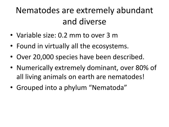Nematodes are extremely abundant and diverse