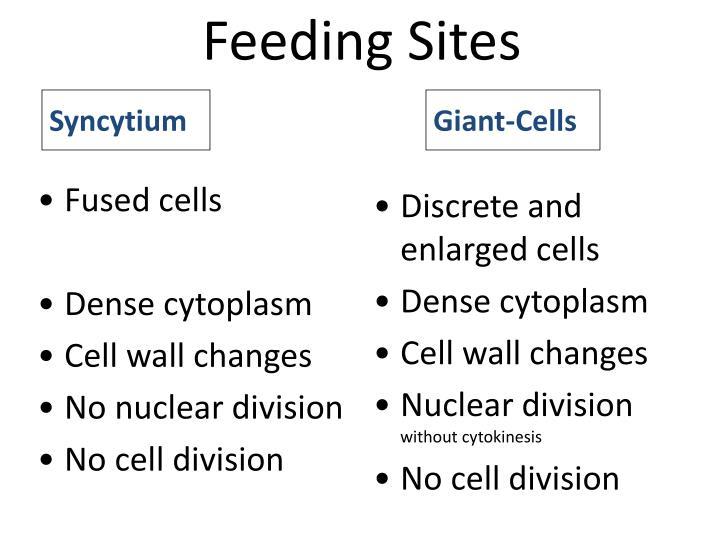 Feeding Sites