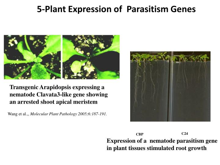5-Plant Expression of  Parasitism Genes