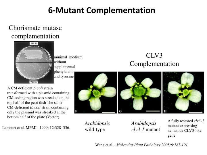 6-Mutant Complementation