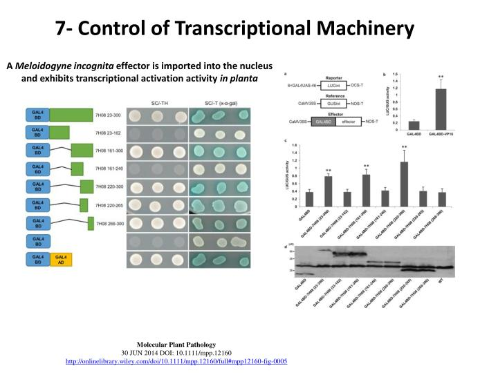 7- Control of Transcriptional Machinery