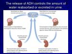 the release of adh controls the amount of water reabsorbed or excreted in urine
