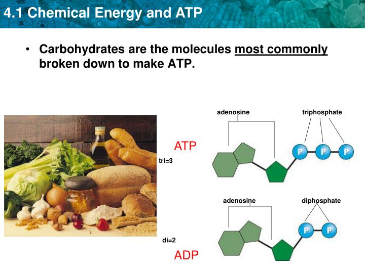 Carbohydrates are the molecules
