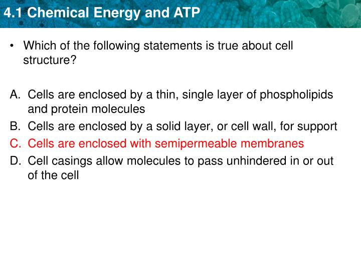 Which of the following statements is true about cell structure?