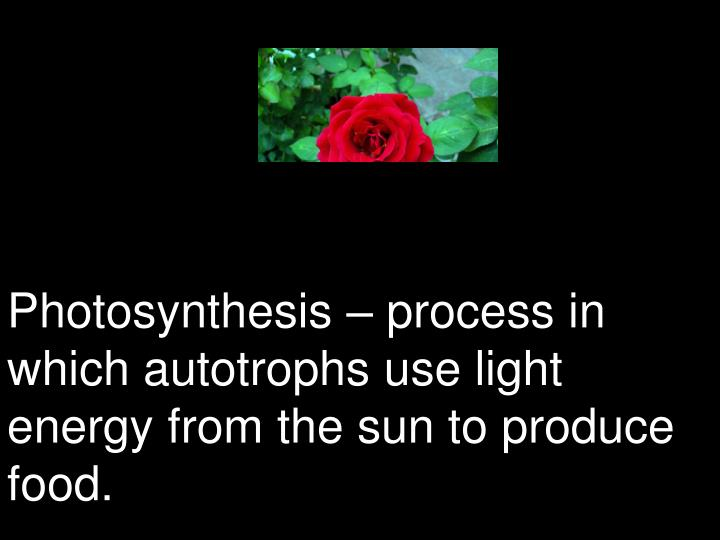 Photosynthesis – process in which autotrophs use light energy from the sun to produce food.