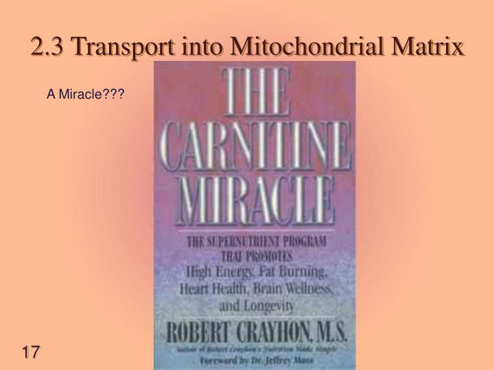 2.3 Transport into Mitochondrial Matrix