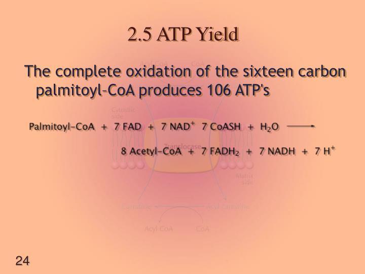 2.5 ATP Yield