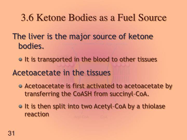 3.6 Ketone Bodies as a Fuel Source