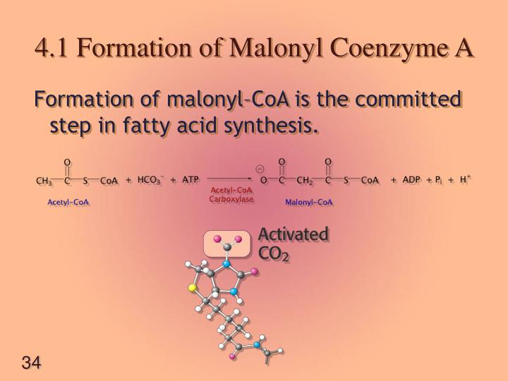 4.1 Formation of Malonyl Coenzyme A